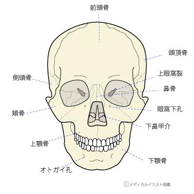 顎関節症に頭蓋矯正